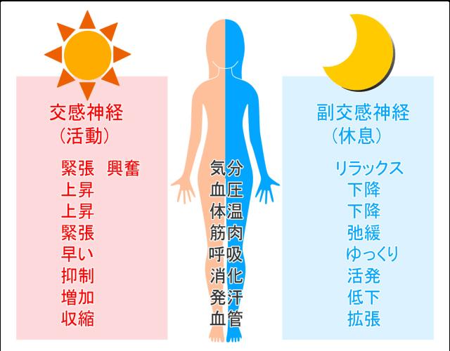 「交感神経」は活動、「副交感神経」は休息です。